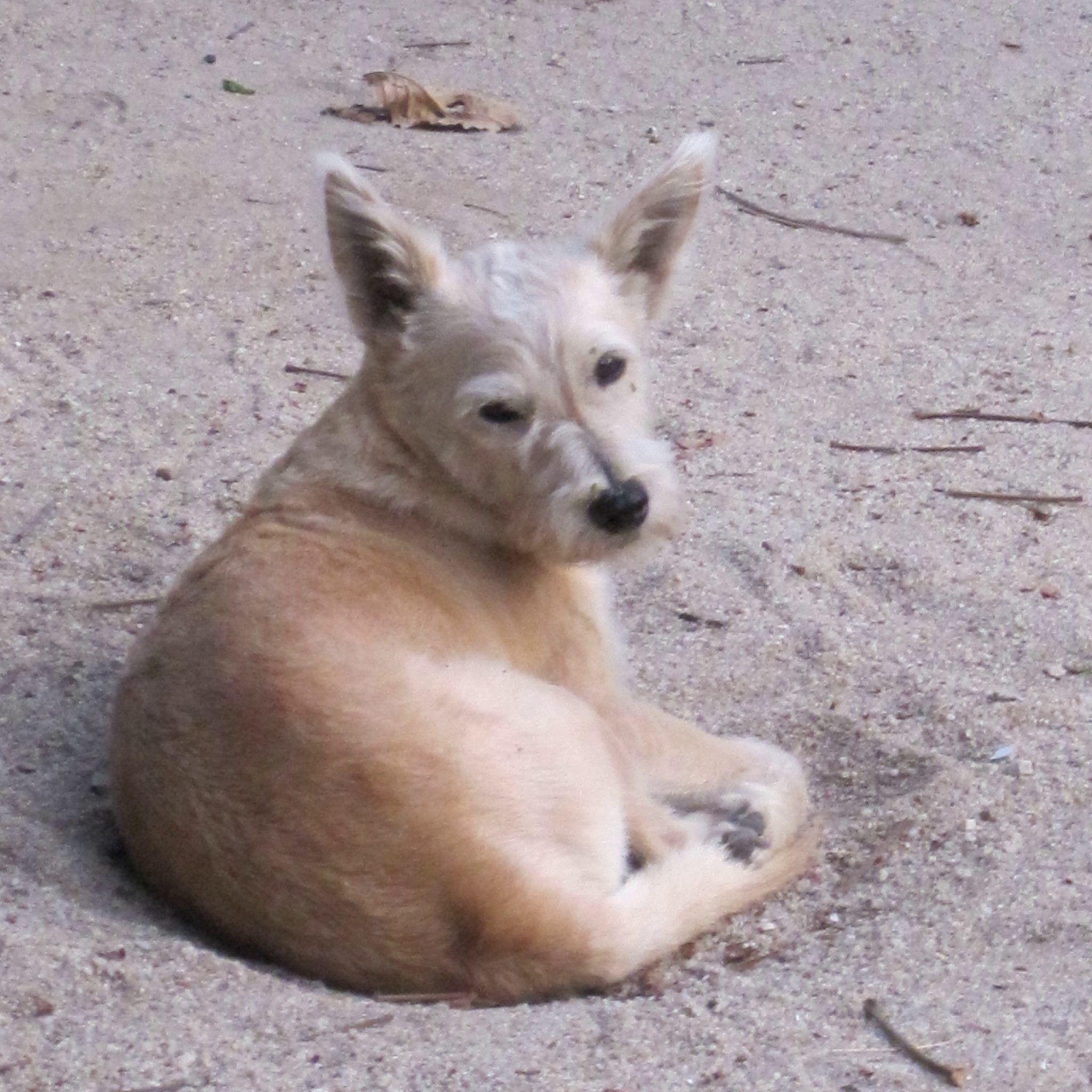 klosterhund buddhirefuge